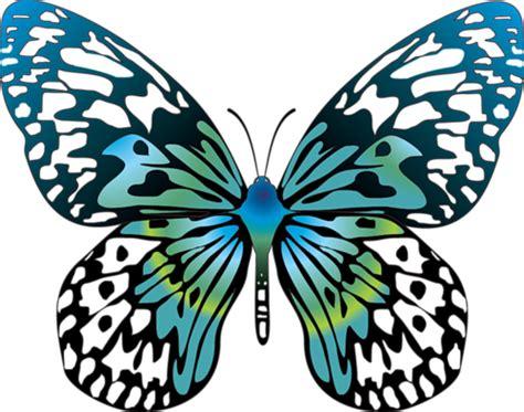 Lu 7 Warna Berbentuk Kupu Kupu kumpulan gambar kupu kupu unik langka dan warna warni
