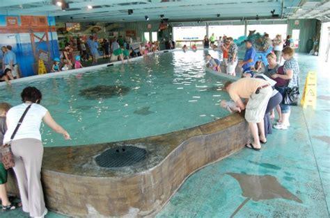 aquarium design services fargo stingray bay columbus ohio zoo stuff to try
