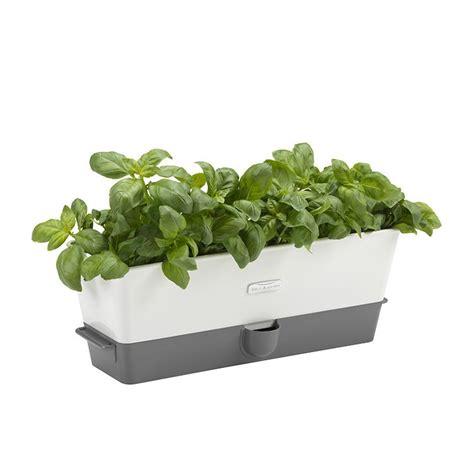 cole mason self watering indoor herb garden planter new cole mason self watering herb keeper triple ebay