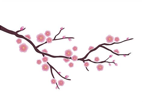 Cherry Blossom Facts cherry blossom tree clip art vector images