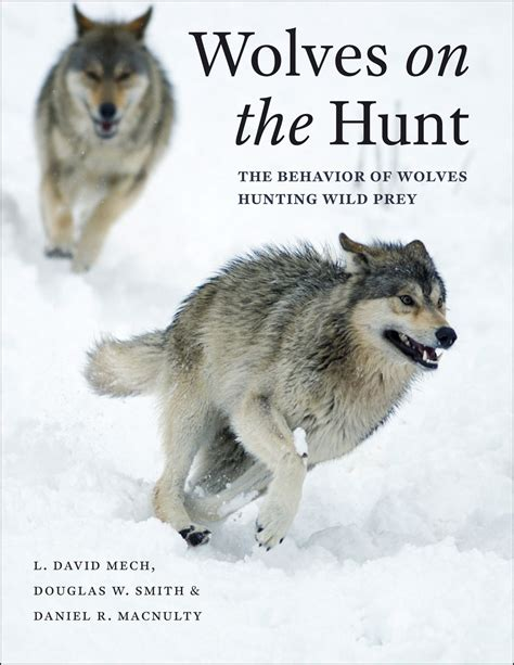 wolves picture book book review wolves on the hunt open letters monthly