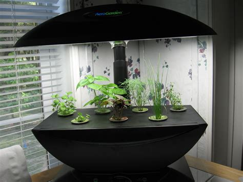 transplant  aerogarden  earth marijuana