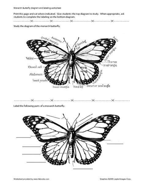 diagram of a butterfly monarch butterfly diagram and labels drawings monarch