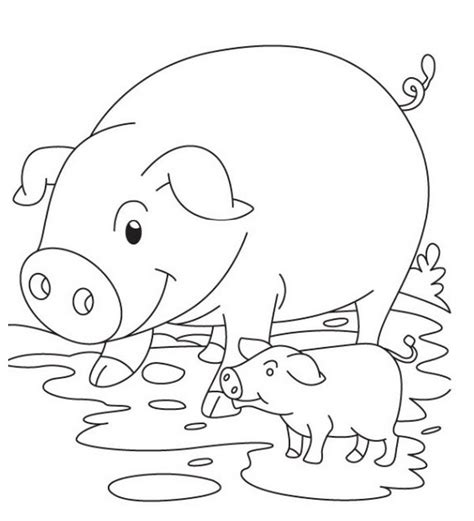 pigs coloring pages coloring home pig template animal templates free premium templates