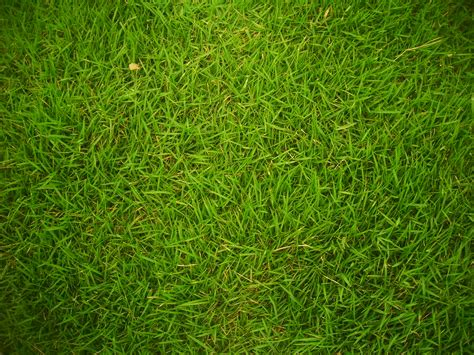 pattern photoshop grass tutorial 3d grassy earthy effect in photoshop antoine
