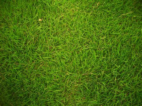 Floor Plan Generator Free by File Grass 01 Jpg Wikimedia Commons