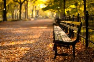 buy a bench in central park bucket list new york in the fall let love guide