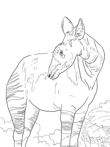 okapi giraffid coloring page free printable coloring pages