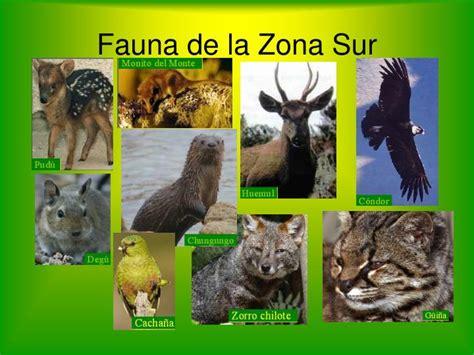 fauna de la zona sur chile en imagenes ppt conociendo chile powerpoint presentation id 5514222