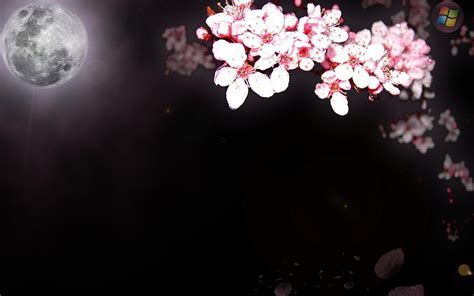 background sakura sakura backgrounds wallpaper cave
