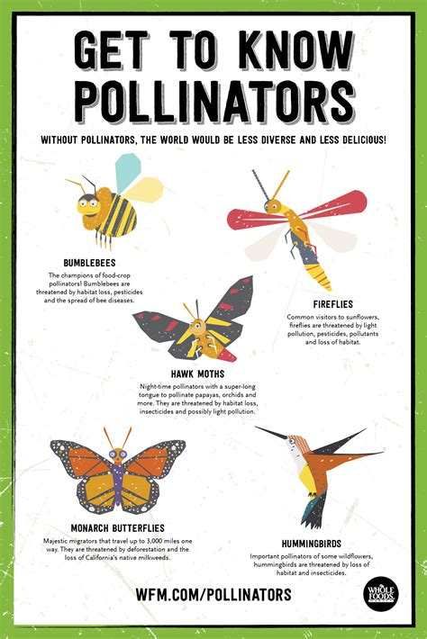 Where Can I Get A Whole Foods Gift Card - protecting pollinators whole foods market