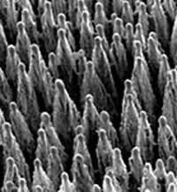 silicio negli alimenti altri oligoelementi in tracce