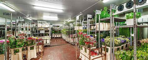 celle frigorifere per fiori mercato fiore di guarino ignazio s r l fiori e