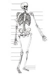 axial skeleton labeling worksheet abitlikethis