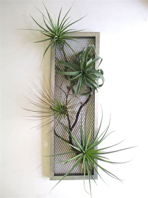 plante fleur interieur