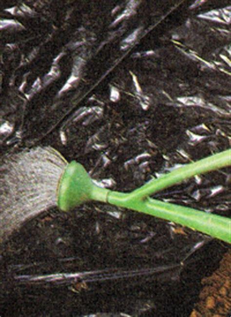 lehmboden garten lehmboden im garten sandboden und sumpfgel 228 nde