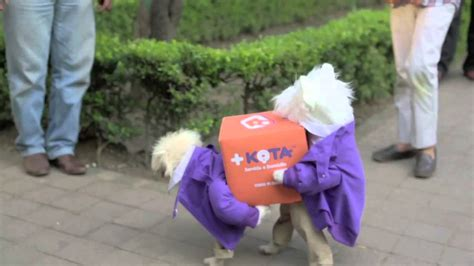 puppy delivery delivery dogs kota