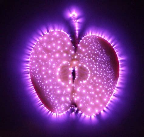 kirlian aura test the science of auras energy