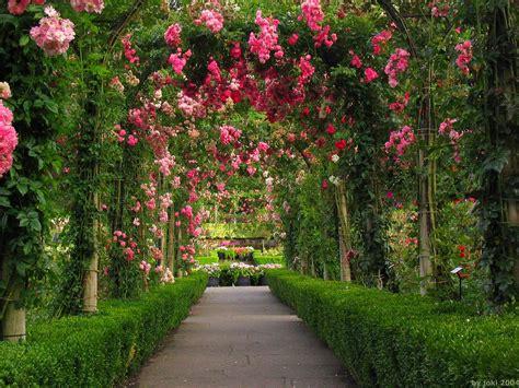 Wallpaper Taman Bunga Ros | sekai tanaman hias untuk pengobatan