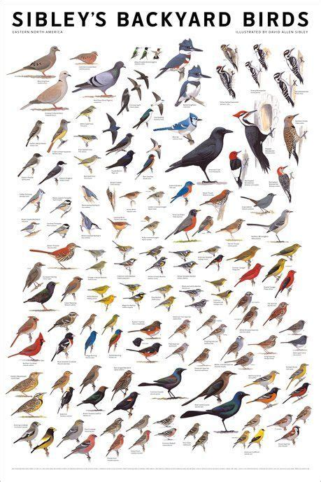 backyard bird finder best 25 bird identification ideas on pinterest bird watching backyard birds and why do birds