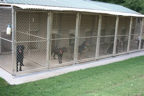 pace setter dog training pacesetter training kennel pet training 43 home pl