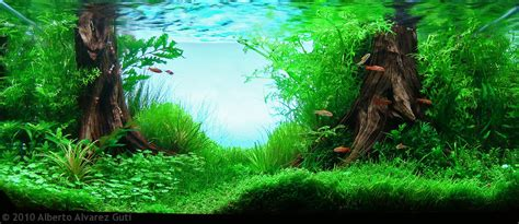 freshwater aquascaping manage your freshwater aquarium tropical fishes and