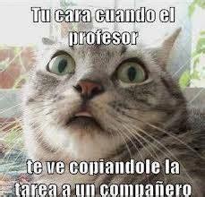 memes chistosos 2 fotos con el tel 233 fono youtube gatos chistosos xd votaci 243 n