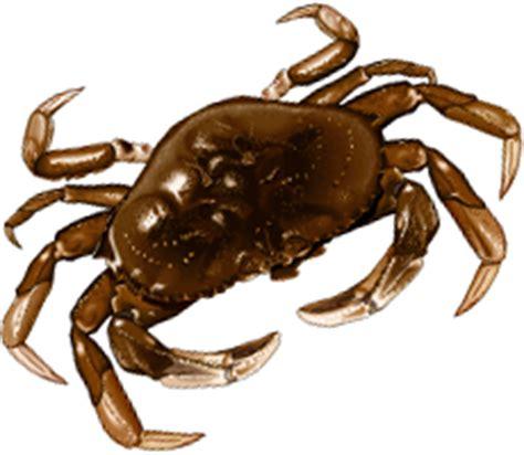 cuisson crabe dormeur crabe ikonet alimentation
