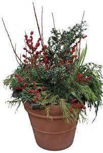 Winter Patio Plants Wonderful Winter Containers Fine Gardening