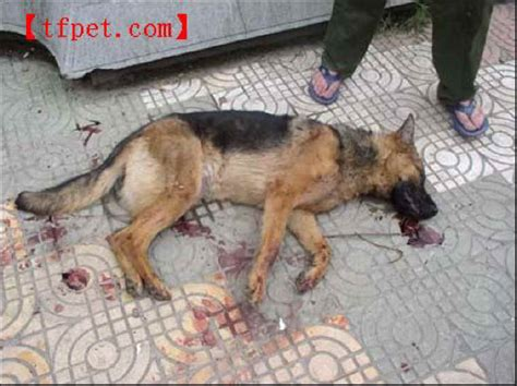 puppy beaten exploitaion cruelty 41 s best friend not for everyone photo