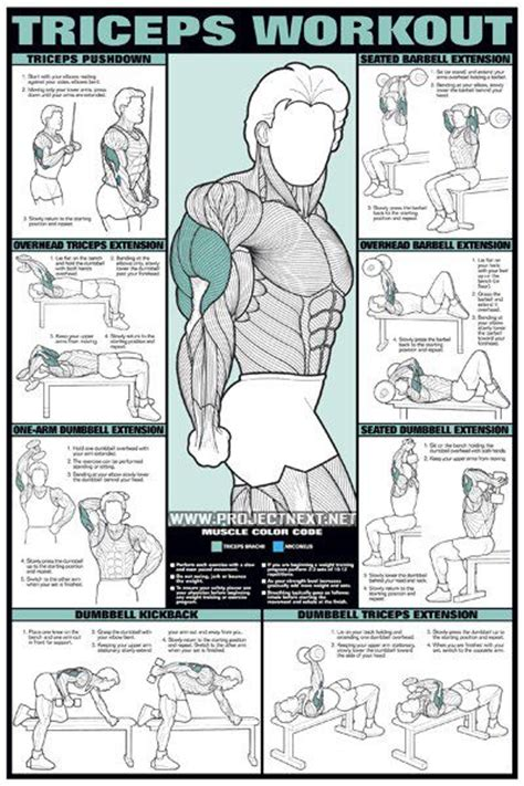 triceps workout for barbell dumbbell seated exercise