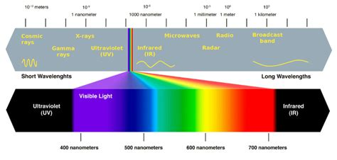 color spectrum wavelengths why are plants green