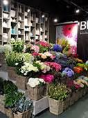 bloem amsterdam oostpoort amsterdam bloemen bestellen en bezorgen bloem bloemenzaak nl