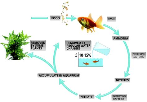 fish cycle diagram what is the nitrogen cycle and why is it important to my