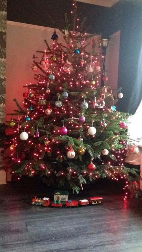wilkinsons fibre optic christmas trees readers favourite 18 trees in newcastle and the east chronicle live