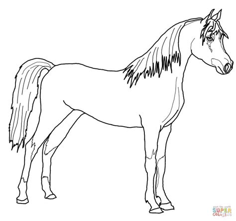 Fancy Arabian Horse Coloring Pages Coloring Pages Arabian Coloring Pages