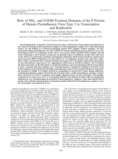 p protein pdf of nh2 and cooh terminal domains of the p protein of
