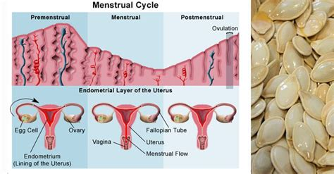 how to prevent pms mood swings 44 best menstrual cycle images on pinterest menstrual