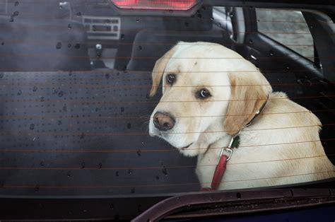 coup de chaleur quoi faire chiens dans des v 233 hicules la prudence est de mise le