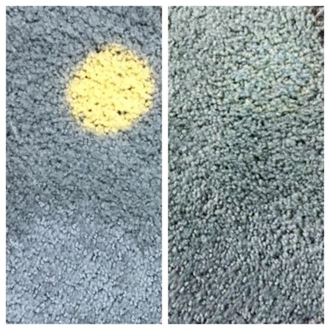 how to a rug color carpet spot repair raleigh cary apex forest nc a clean solution llc
