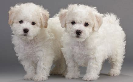 small house dogs 30 breeds that are house dogs for families