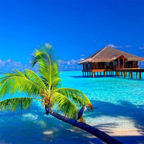 tropical house music 8tracks radio tropical house 10 songs free and music playlist