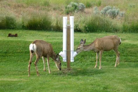 Build Deer Feeder the easiest way on how to make a deer feeder