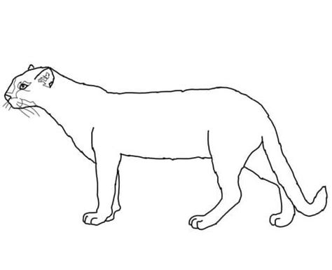 Jaguarundi Coloring Page | jaguarundi coloring page free printable coloring pages