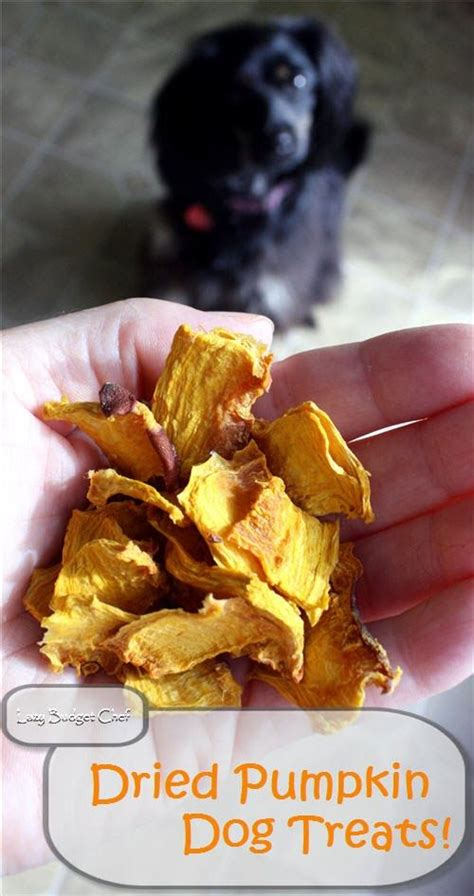 how much pumpkin to give a puppy 17 best images about for the dogs on diy toys diy and smells