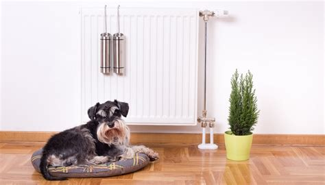 dog proofing house how to puppy proof your home important tips on what you need to do
