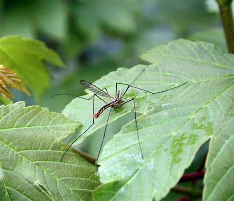 how to keep mosquitoes out of house mosquito repelling plants how to keep mosquitoes out of your yard