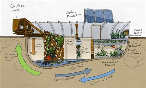 backyard goat farming the repurposed hydro micro farm garden culture magazine