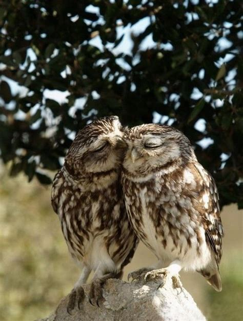 owl lovers owl couple quotes quotesgram