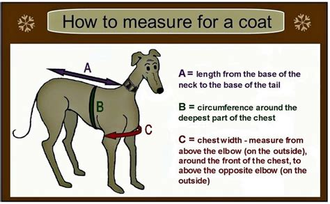 sewing pattern greyhound coat 17 best images about dog pet ideas on pinterest dog
